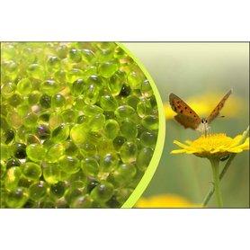 Aromatherapie geur Kamille